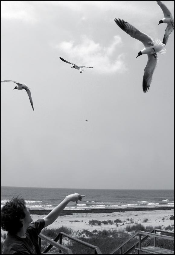 http://no-surrender.cowblog.fr/images/SeagullsbyAtroxM.jpg